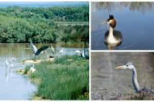 Locaplage cropped-parc-ornithologique-Teich.jpg