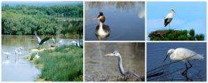 Locaplage parc ornithologique Teich